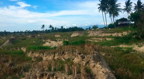 Rice irrigation intensified landslides in the deadliest earthquake of 2018, says study