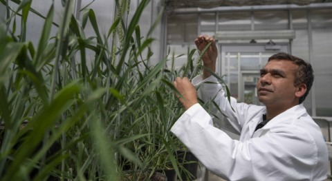 Scientists find new way to develop drought-resilient crops