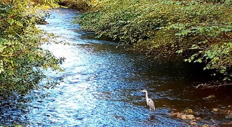 Scottish Water invests £7.5M to improve the Water of Leith