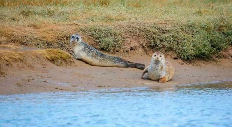 River Thames comes to life with the birth of 138 seals