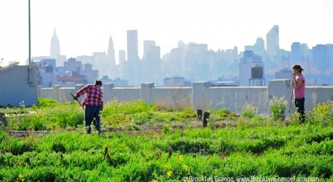 Urban agriculture: concrete can be green