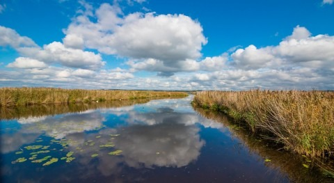Blue Account launches comprehensive coastal wetlands acreage database