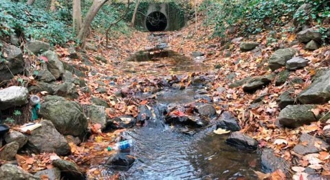 Hypoxic dead zones found in urban streams, not just at the coast