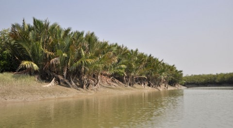 Indian Sundarbans named as Wetland of international importance