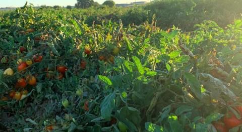 Discovery increases likelihood of growing food despite drought