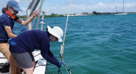 How toxic is the water's surface on Florida's indian river lagoon?