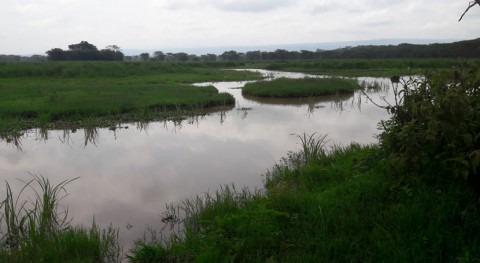 Kenya's wetlands: financing challenge