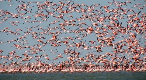 Estuario Virrilá recognized as Peru's 14th Wetland of International Importance