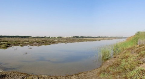 United Arab Emirates names Wasit Nature Reserve as Ramsar Site