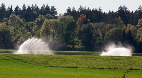 Irrigation alleviates hot extremes