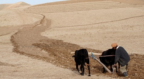 FAO and UNCCD launch briefing note on water security and combatting drought