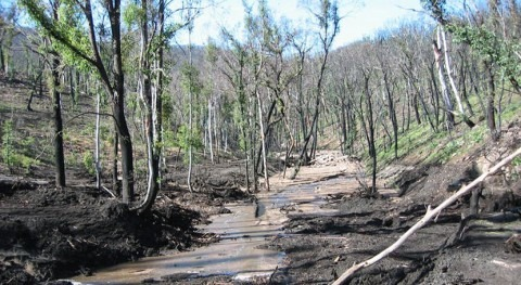 Response to fire impacts water levels 40 years into future
