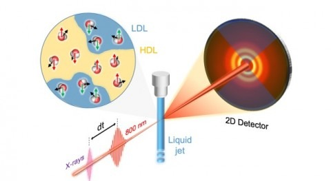 X-rays indicate that water can behave like liquid crystal