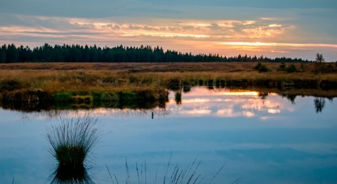 Trump administration repeals Obama-era rule conserving wetlands and streams