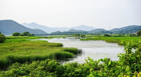 Wetlands are still in decline