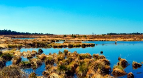 Earth observation data offers hope for Africa's wetlands