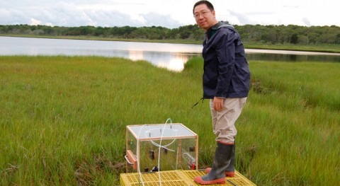 Wetlands can keep up with sea level rise to offset climate change