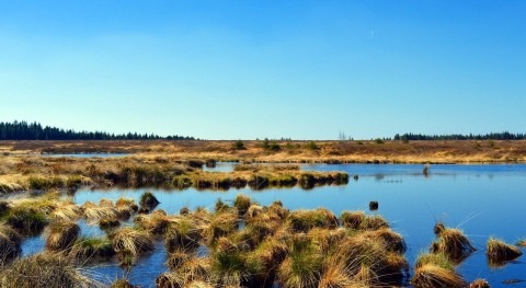 What are wetlands?