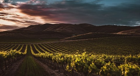 California issues state-wide regulations for winery wastewater