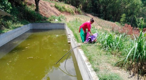 As rains falter, water harvesting quenches Nepal's thirst for irrigation