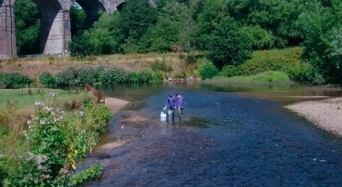 Water companies are main cause of microplastic pollution in UK's rivers
