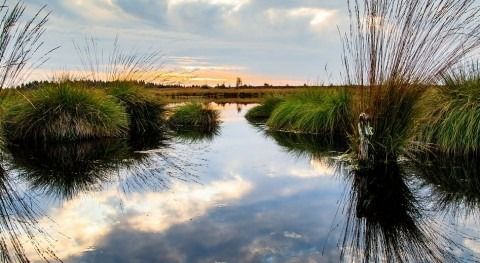 Harness the power of wetlands to tackle climate change - World Wetlands Day