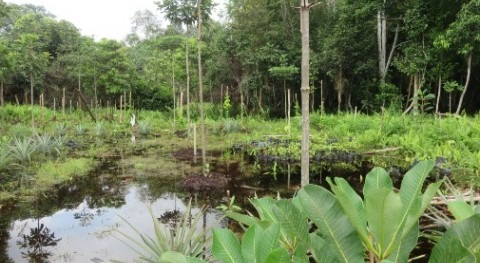 Local community involvement crucial to restoring tropical peatlands
