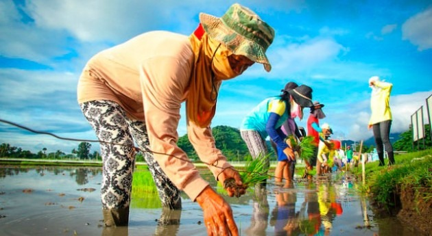 Enhancing the resilience of the Philippine agriculture against climate change
