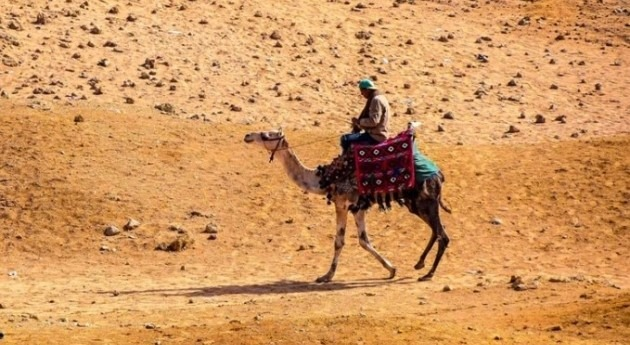 Middle East and North Africa: heatwaves of up to 56 degrees Celsius without climate action