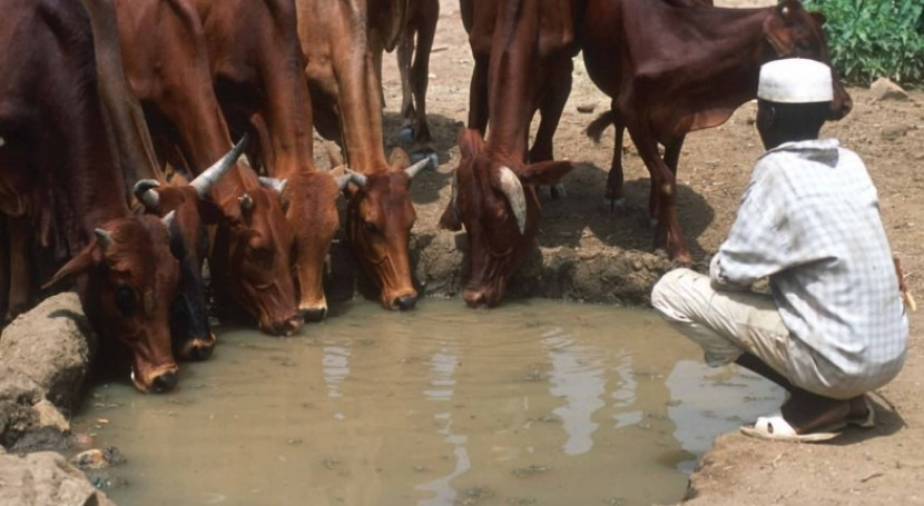 FAO launch discussion paper on accounting livestock water productivity