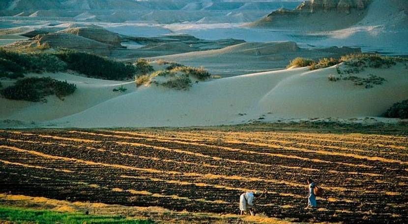 Africa's drylands are getting more support. How to make the most ofthis
