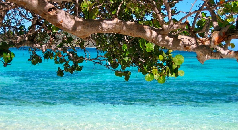 Barbados launches first Caribbean climate reslience project