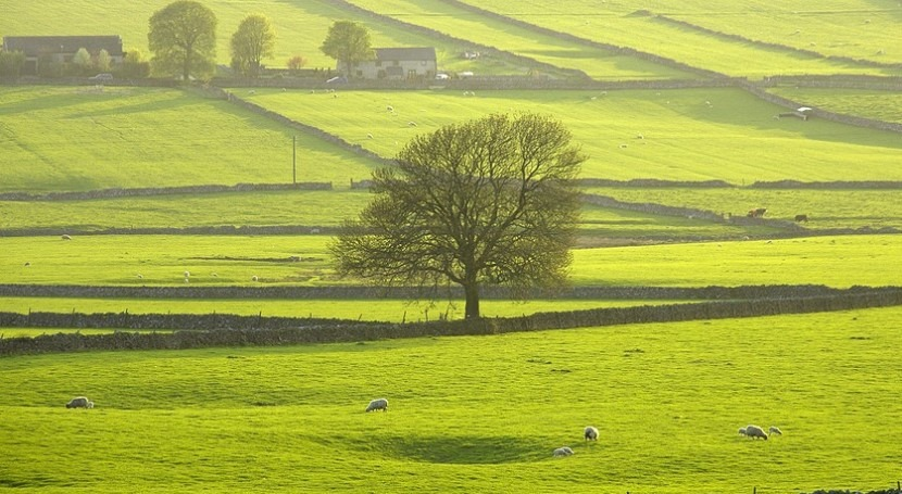 England-wide initiative launches to restore nature