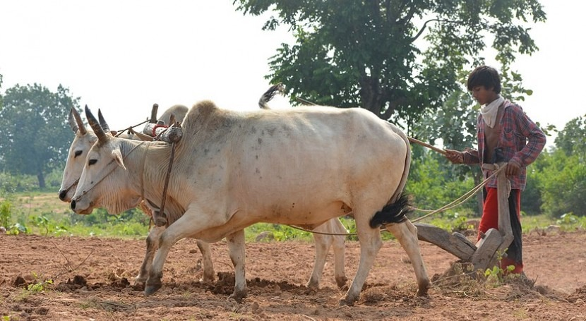 New membrane technologies helping India's rural farming communities