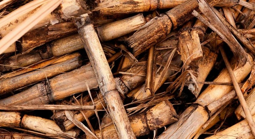 Metito to deliver comprehensive water treatment program for 10 biomass power plants in Thailand