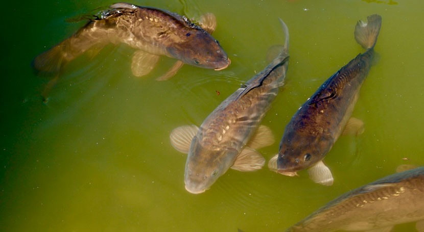 Fish quick on the draw in rapidly changing surroundings