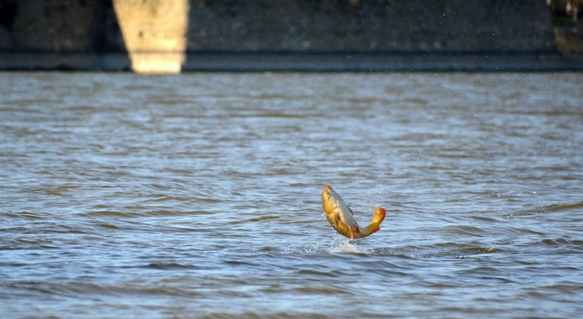 Reducing global warming matters for freshwater fish species
