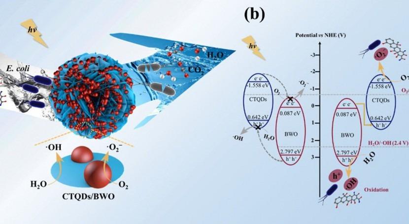 Scientists develop Z-scheme catalyst for contaminants in water
