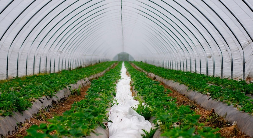 Drip irrigation market worth $8.5 billion by 2025
