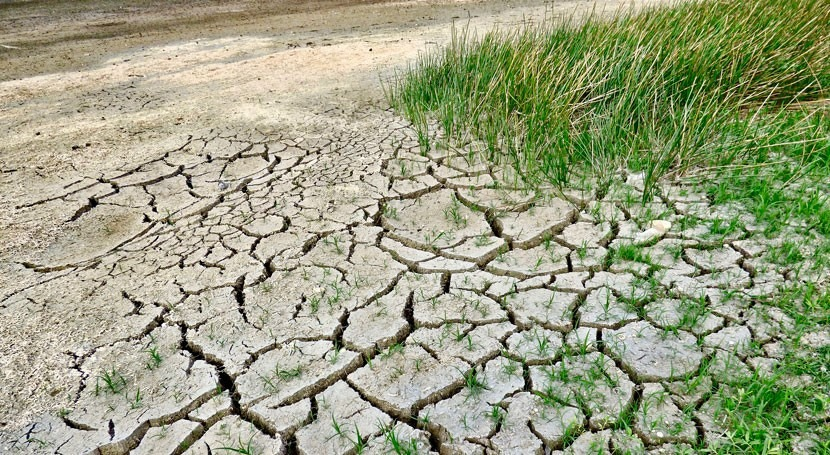 Restore land to save the planet, boost the economy, says head of body combating desertification