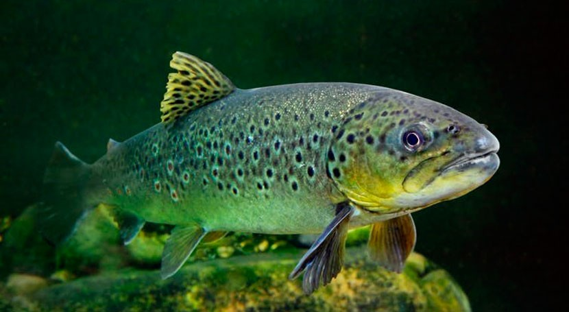 Fish hooked on meth – the consequences of freshwater pollution