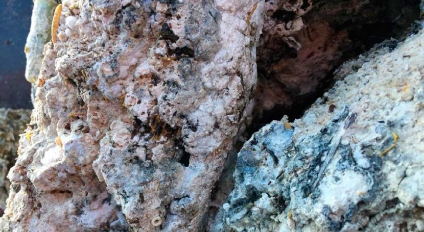 Foot long fatberg freed from England's sewer