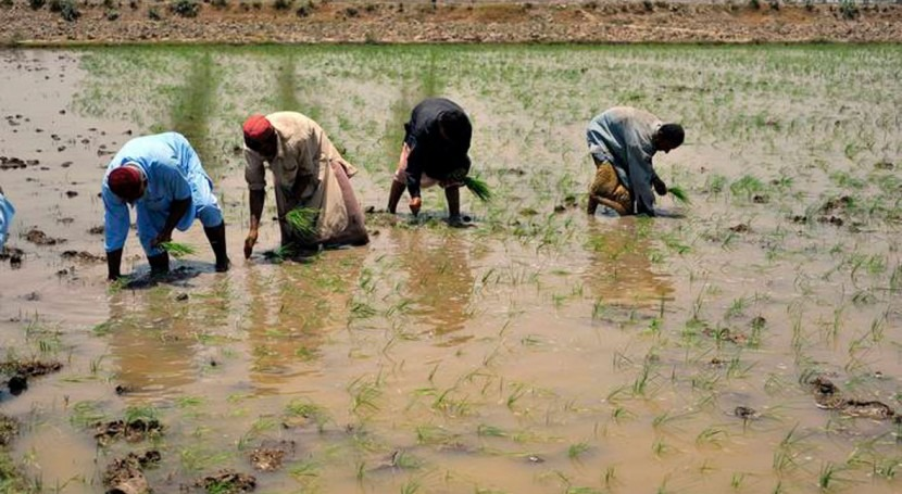 Green Climate Fund approves major FAO climate change resilience project in Pakistan
