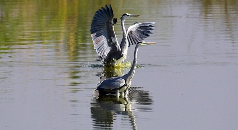 Wellbeing benefits of wetlands