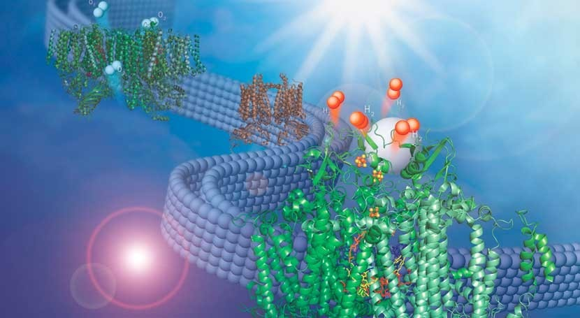 Discovery adapts natural membrane to make hydrogen fuel from water