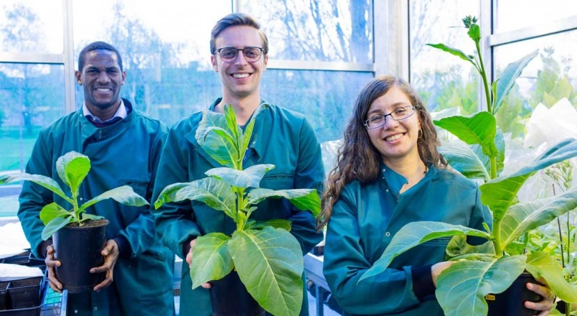 Photosynthetic hacks can boost crop yield, conserve water