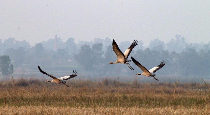 India designates ten wetlands