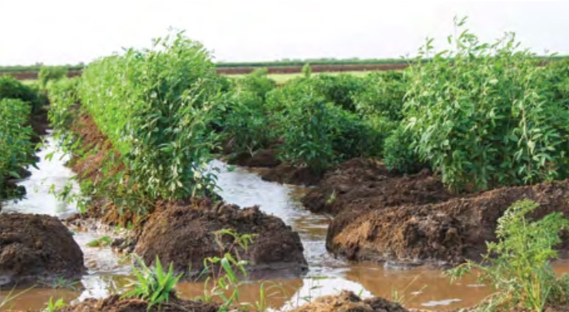 World Bank working paper on governance in irrigation and drainage