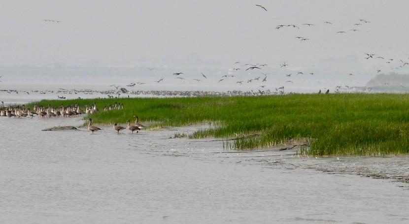 Republic of Korea adds Janghang Wetland to the List