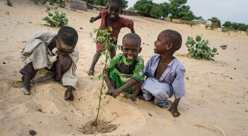 Lake Chad trees keep deadly drought at bay